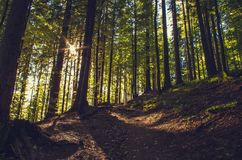 Nascer do sol na floresta da montanha imagem de stock royalty free