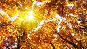 Nascer do sol na floresta do outono Foto de Stock