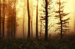 Nascer do sol na floresta encantado da fantasia com névoa Foto de Stock