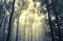 Nascer do sol na floresta mágica com névoa misteriosa Imagem de Stock Royalty Free