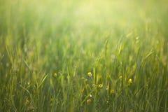Nascer do sol na grama Foto de Stock Royalty Free
