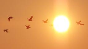 Nascer do sol na praia Imagem de Stock