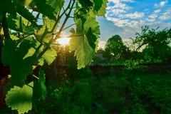 Nascer do sol na vila Imagens de Stock Royalty Free