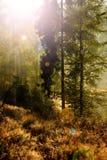 Nascer do sol nas madeiras Fotos de Stock