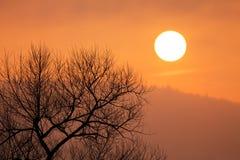 Nascer do sol nevoento fotos de stock