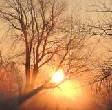 Nascer do sol nevoento Imagem de Stock