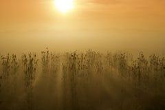Nascer do sol nevoento Foto de Stock Royalty Free