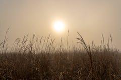 Nascer do sol nevoento com plantas fotografia de stock