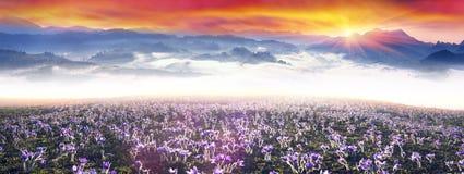 Nascer do sol nevoento nas montanhas Carpathian Imagens de Stock Royalty Free