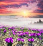 Nascer do sol nevoento nas montanhas Carpathian Imagem de Stock