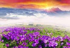 Nascer do sol nevoento nas montanhas Carpathian Fotos de Stock
