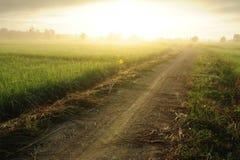 Nascer do sol no campo. imagem de stock royalty free