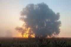 Nascer do sol no campo Fotos de Stock