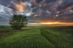 Nascer do sol no campo sob o céu nebuloso fotos de stock royalty free