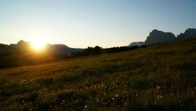 Nascer do sol no cume nas dolomites com flores bonitas Fotografia de Stock Royalty Free