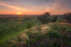Nascer do sol no estepe Estepe coberto com uma grama de florescência da pena fotos de stock royalty free