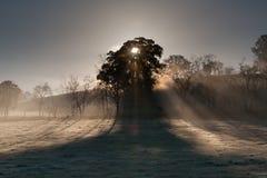 Nascer do sol sobre o vale de Yarra no inverno Fotografia de Stock