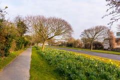 Nascer do sol no lado da estrada Imagem de Stock