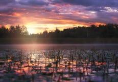 Nascer do sol no lago coberto com o ` s do lírio de água Imagens de Stock Royalty Free