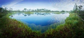 Nascer do sol no pântano Pântano frio gelado Terra gelado Lago e natureza swamp As temperaturas do gelo amarram dentro Ambiente n fotografia de stock royalty free