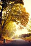 Nascer do sol no parque do outono Fotografia de Stock Royalty Free