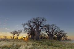 Nascer do sol no ` s do baobab de Baines Imagem de Stock Royalty Free