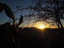 Nascer do sol no solitário com primeiro plano do cacto e do Acasia entre o DES Imagens de Stock Royalty Free