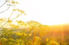 Nascer do sol no verão Imagens de Stock