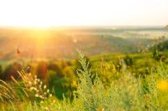 Nascer do sol no verão Imagem de Stock Royalty Free