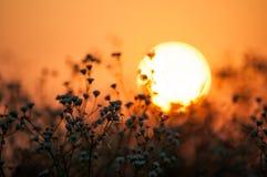 Nascer do sol nos campos Imagens de Stock Royalty Free
