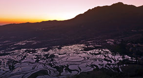 Nascer do sol nos terraços do arroz Fotografia de Stock