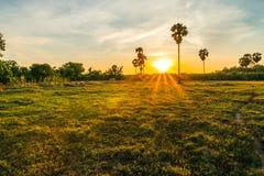 Nascer do sol o campo no quintal imagem de stock
