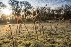 Nascer do sol do orvalho da manhã Imagens de Stock