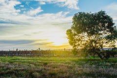 Nascer do sol perfeito Fotografia de Stock