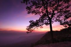 Nascer do sol, por do sol no penhasco, com as silhuetas da árvore (Pha Mak Duk) no parque nacional de Phukradung, Tailândia (expo Fotografia de Stock