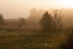 Nascer do sol do prado na paisagem nevoenta da natureza da manhã imagens de stock royalty free