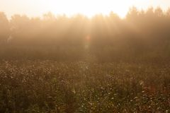 Nascer do sol do prado na paisagem nevoenta da natureza da manhã fotografia de stock