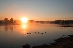 Nascer do sol que reflete embora a névoa do amanhecer em gansos canadenses em Yellowstone River em Hayden Valley Fotos de Stock