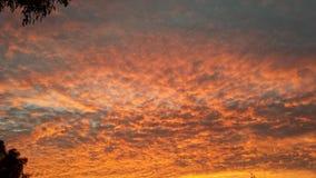 Nascer do sol selvagem Imagens de Stock Royalty Free