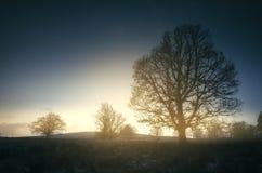 Nascer do sol sobre árvores no prado da manhã com luz mágica Imagem de Stock