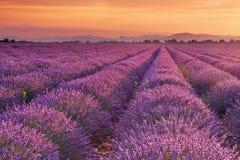 Nascer do sol sobre campos da alfazema no Provence, França imagens de stock