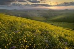 Nascer do sol sobre lavagens cobertas da flor selvagem Foto de Stock Royalty Free