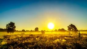 Nascer do sol sobre a névoa no Ermelose Heide fotos de stock