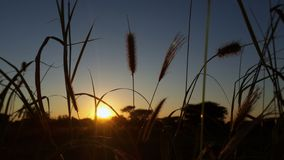 Nascer do sol sobre Namibai Foto de Stock