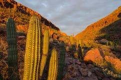 Nascer do sol sobre o cacto no deserto mexicano foto de stock royalty free