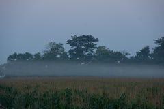 Nascer do sol sobre o campo de milho Fotografia de Stock