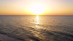 Nascer do sol sobre o mar Moscas dos pássaros da gaivota no céu para o sol Céu do nascer do sol da formiga dos pássaros de voo Pá vídeos de arquivo