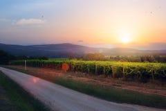 Nascer do sol sobre o vinhedo da uva; landsc da manhã da região da adega do verão Imagem de Stock Royalty Free