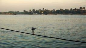 Nascer do sol sobre redes e o barco chineses de pesca em Cochin, Índia filme