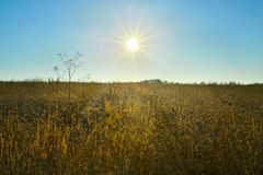 Nascer do sol sobre um campo fotos de stock royalty free